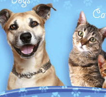 Animal Services Web Portal